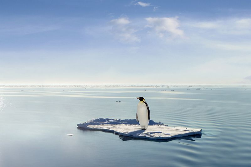 penguin stands alone on melting ice floe