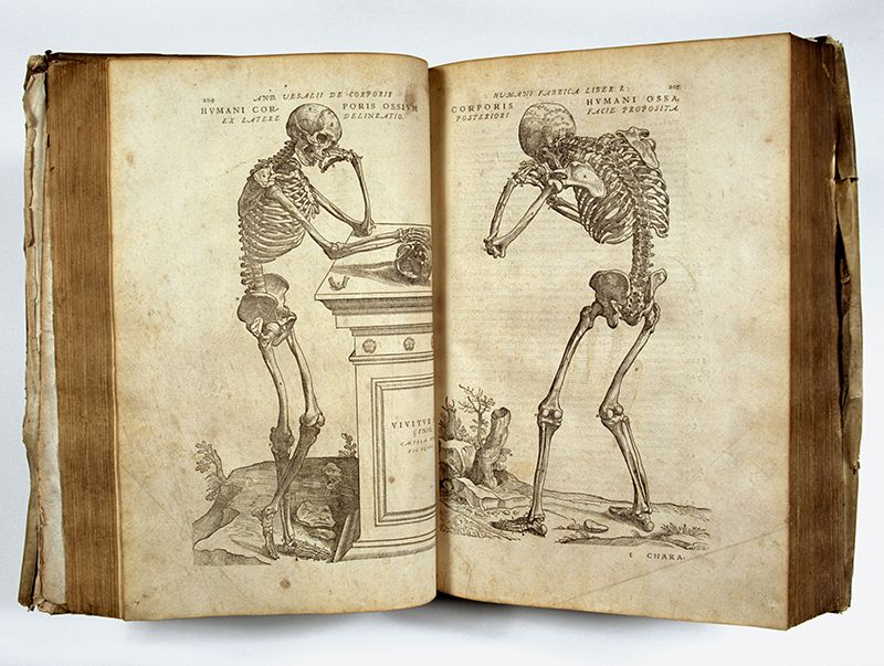 old book with illustrations of bored-looking skeletons